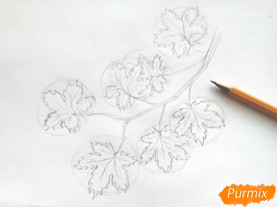Рисуем ветку с кленовыми листьями - фото 3