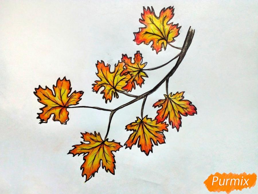 Рисуем ветку с кленовыми листьями - фото 8