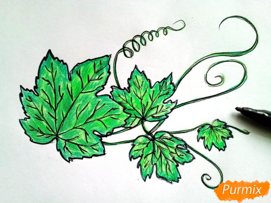 Рисуем ветку с листьями винограда - фото 5