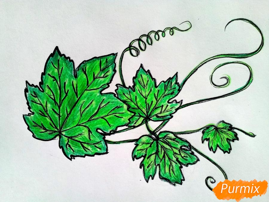 Рисуем ветку с листьями винограда - фото 6