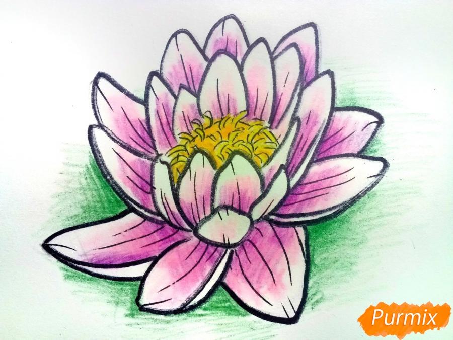 Как нарисовать водяную лилию карандашами поэтапно