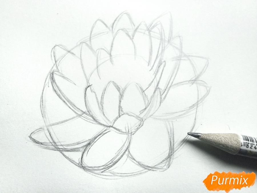 Рисуем водяную лилию карандашами - шаг 4