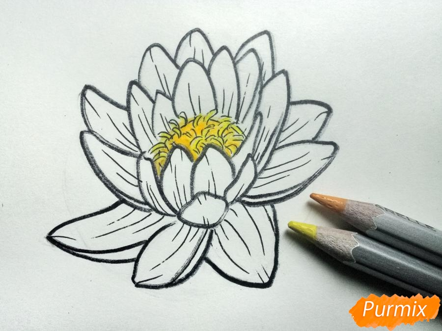 Рисуем водяную лилию карандашами - шаг 7