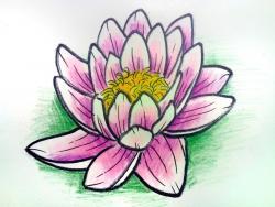 водяную лилию карандашом