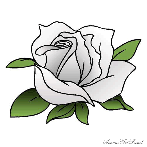 Рисуем белую розу - фото 7