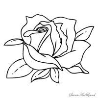 Фото белую розу карандашом