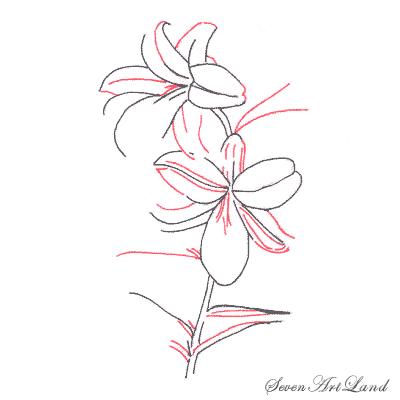Рисуем лилию  или черной ручкой - шаг 3