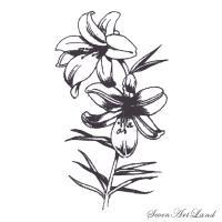 Фото белые Лилии карандашом