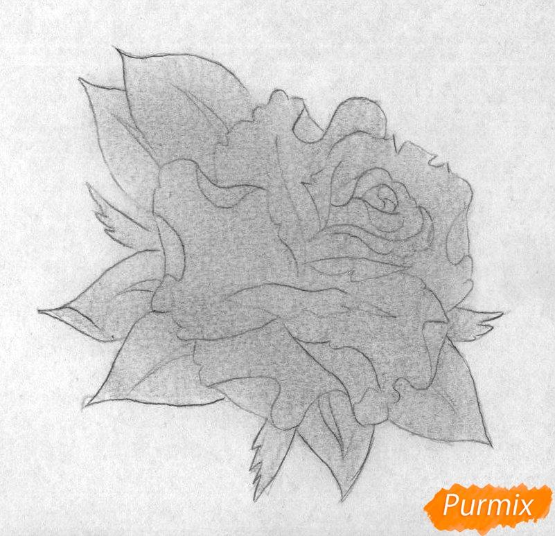 Как нарисовать бутон розы карандашом поэтапно - шаг 2