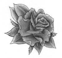 Рисунок бутон розы
