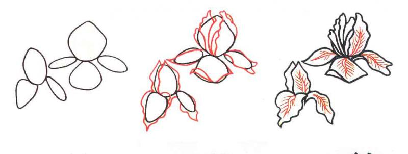 Рисуем цветок ирис