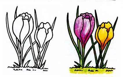 Рисуем цветок крокус - шаг 2