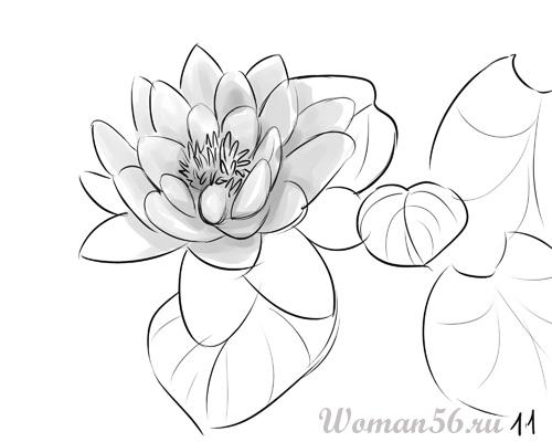 Как нарисовать цветок Лотос карандашом поэтапно