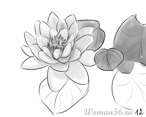 Рисуем цветок лотос - шаг 12