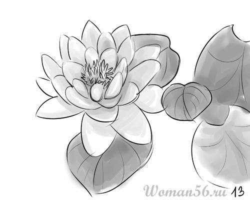 Рисуем цветок лотос - шаг 13
