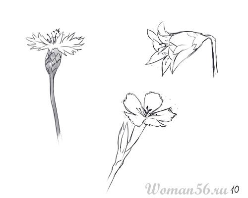 Рисуем цветы: василек, колокольчик и полевую гвоздику