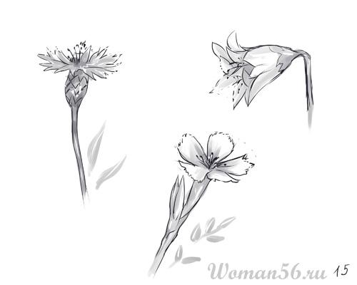 Как нарисовать цветы: василек,