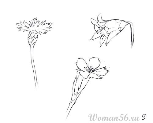 Как нарисовать цветы: василек, колокольчик и полевую гвоздику карандашом поэтапно
