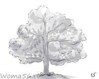 лиственное дерево карандашом