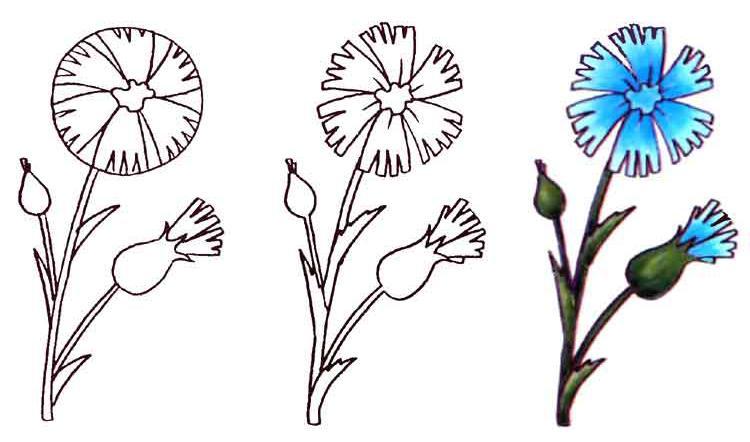Как нарисовать голубой василек на бумаге карандашом