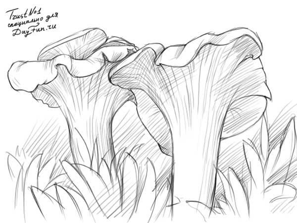 Рисуем грибы лисички