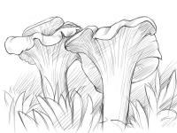 Как нарисовать грибы лисички карандашом поэтапно
