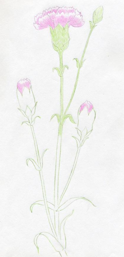 Рисуем гвоздику - фото 5
