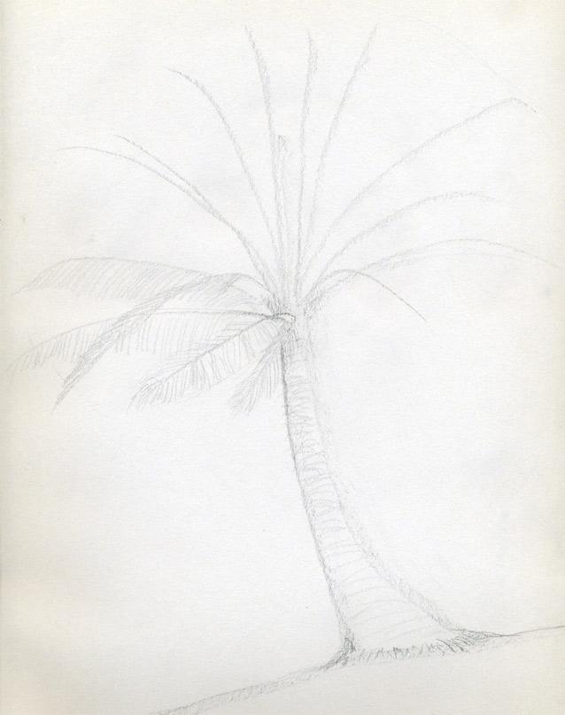 Рисуем кокосовую пальму - шаг 3