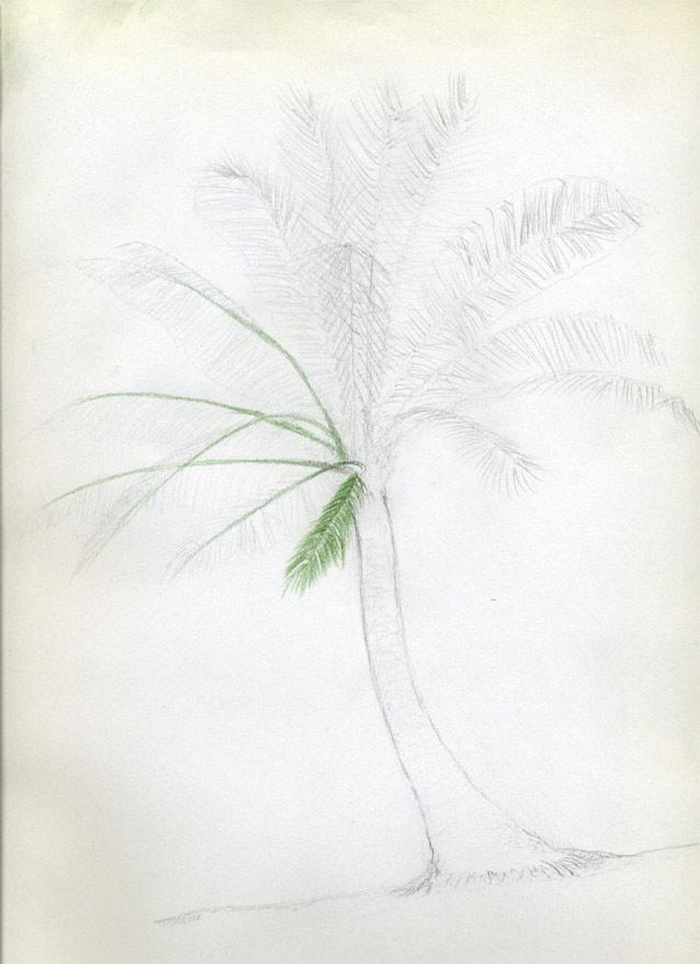 Рисуем кокосовую пальму - шаг 6