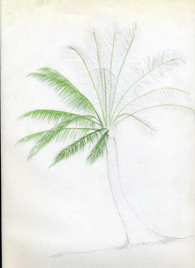 Рисуем кокосовую пальму - шаг 7
