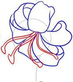 Рисуем лилию  или черной ручкой - шаг 4
