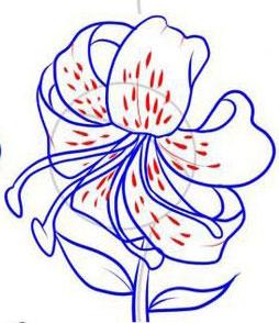 Рисуем лилию  или черной ручкой - шаг 6