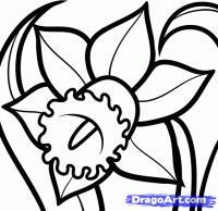 Как нарисовать Нарцисс карандашом поэтапно