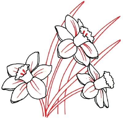 Как рисовать Нарциссы - шаг 4