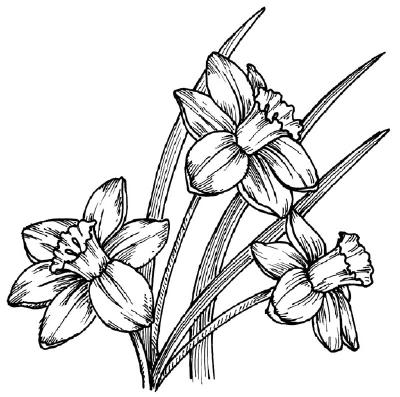 Как рисовать Нарциссы - шаг 5