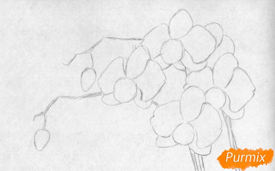 Рисуем орхидею карандашами и чёрной ручкой - шаг 1
