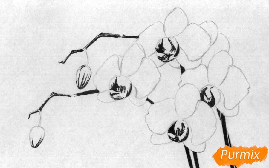 Рисуем орхидею карандашами и чёрной ручкой - шаг 2