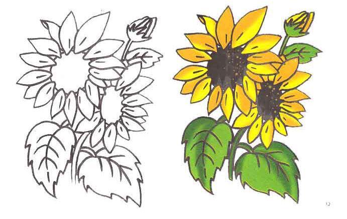 Как нарисовать подсолнух карандашом поэтапно