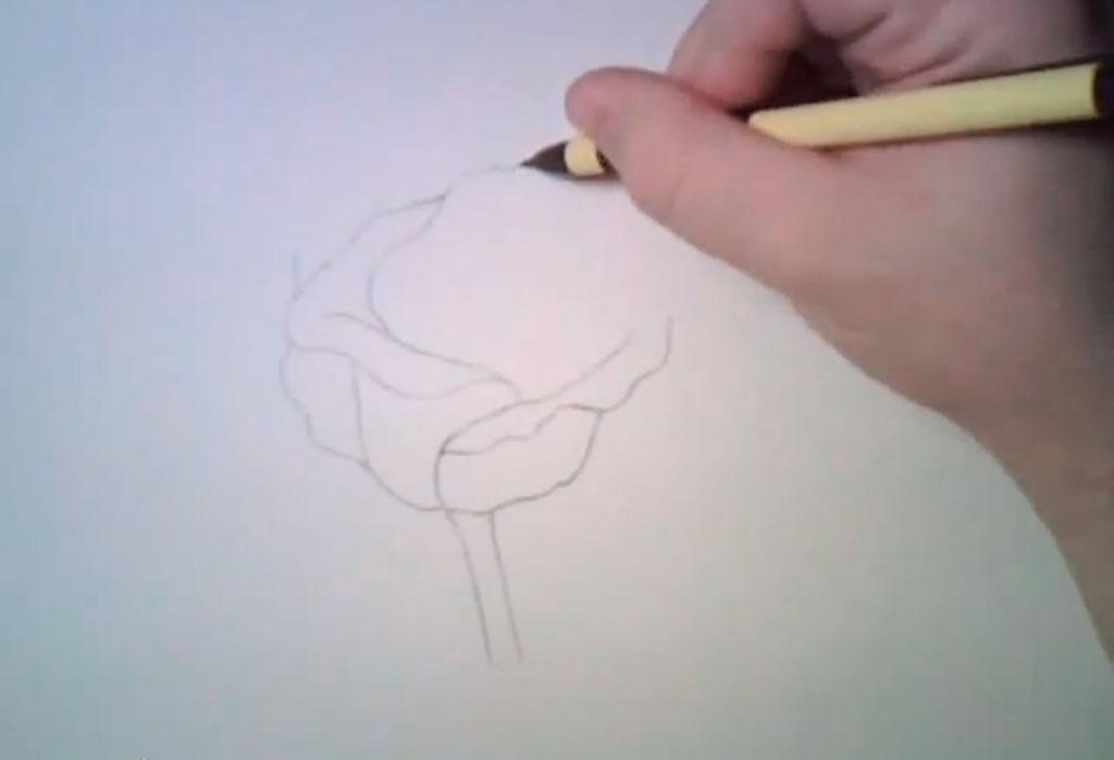 Рисуем реалистичную розу - фото 2