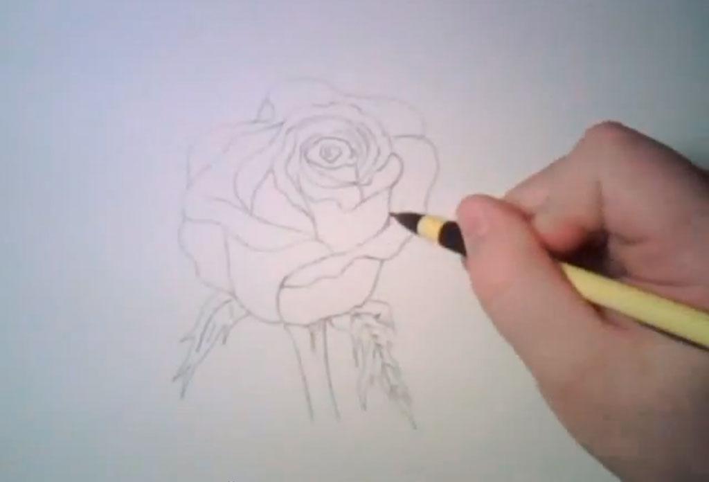 Рисуем реалистичную розу - фото 4