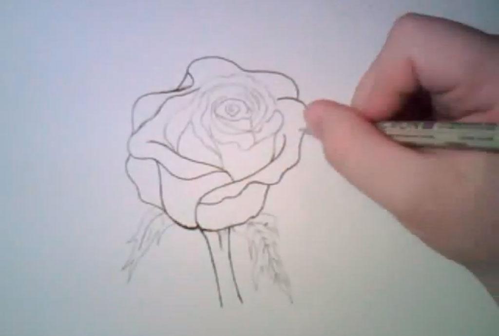 Рисуем реалистичную розу - фото 5