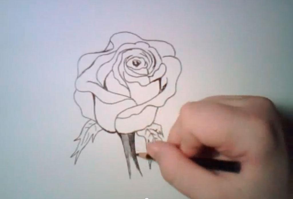 Рисуем реалистичную розу - фото 6
