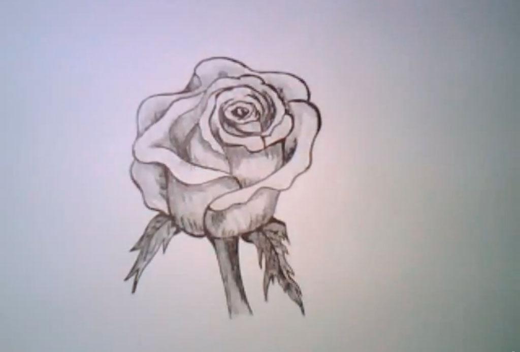 Рисуем реалистичную розу - фото 8
