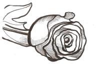 Фото розу