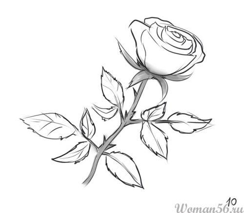 Рисуем розу   для начинающих - шаг 10