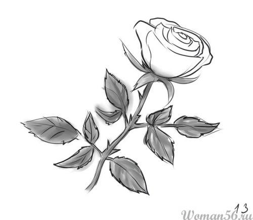 Рисуем розу   для начинающих - шаг 13