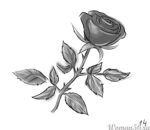 Рисуем розу   для начинающих - шаг 14