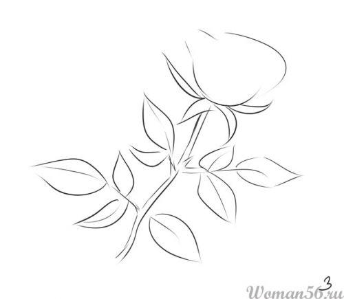 Как нарисовать розу со стеблем карандашом поэтапно