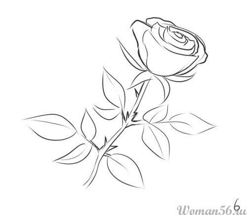 Рисуем розу   для начинающих - фото 6