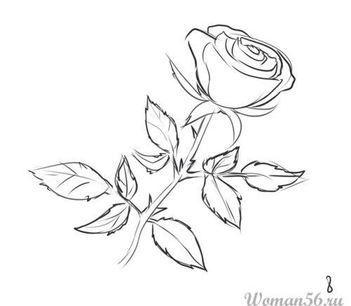 Рисуем розу   для начинающих - шаг 8